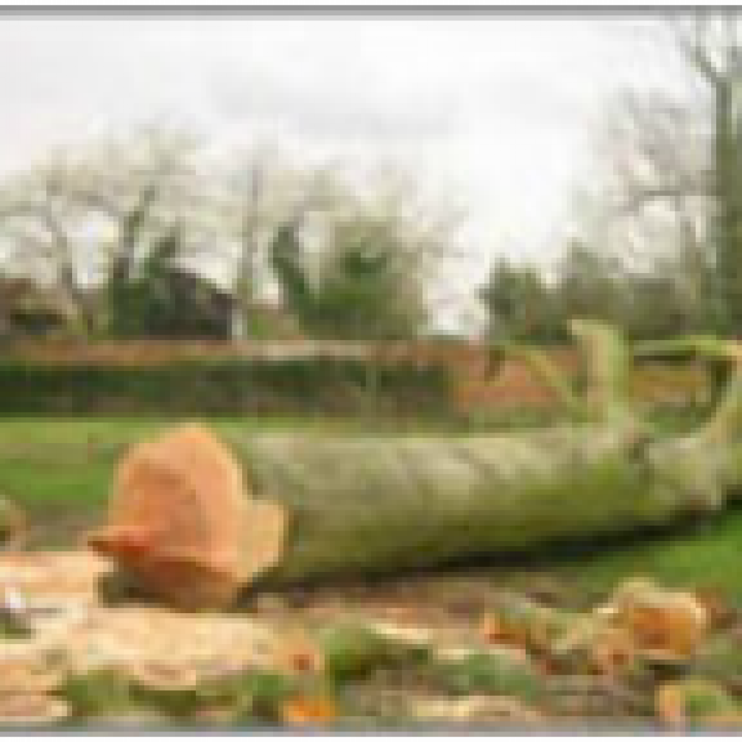 ​TREE REMOVAL SERVICES / FELLING