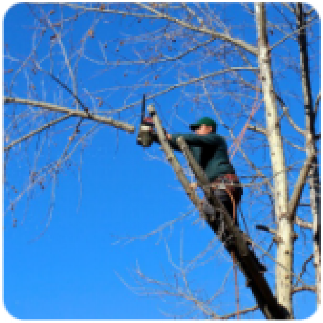 TREE TRIMMING